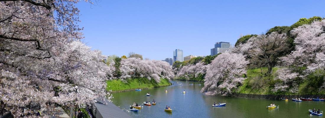 9 Day Tokyo, Hiroshima & Kyoto Cherry Blossom Package Tour