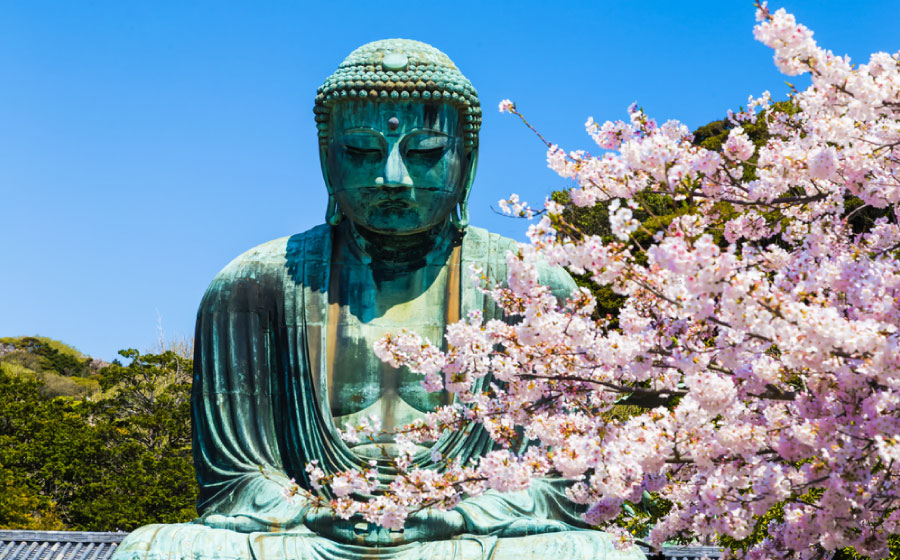 The Great Buddha, cherry blossom