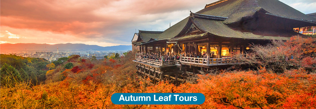 Autumn Leaf Tours